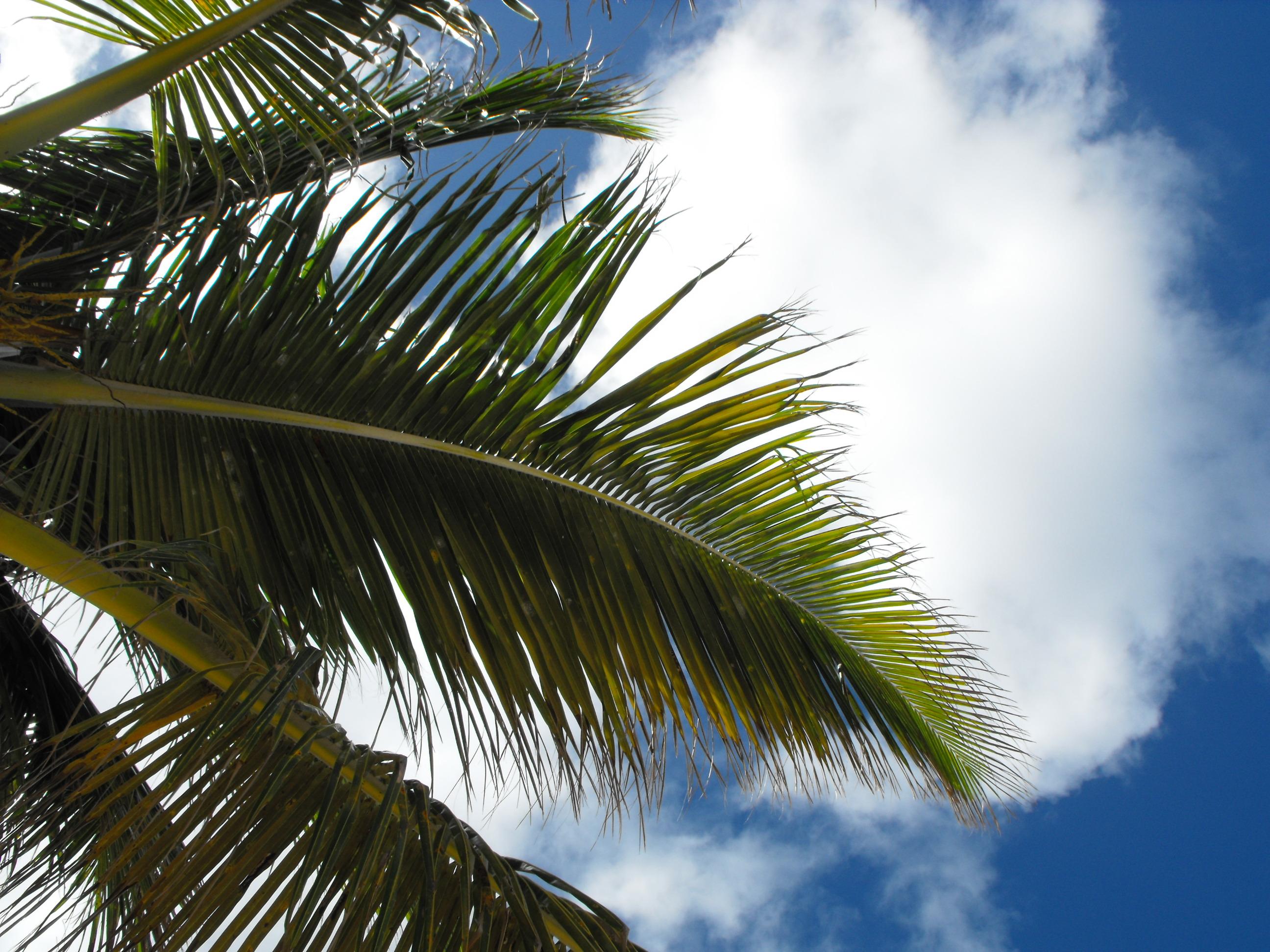 berlin-strandbar-palmer-travelgrip