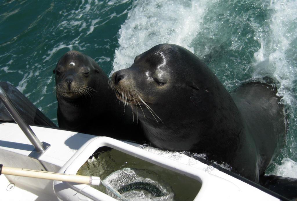 Cabo-San-Lucas-sjölejon-TravelGrip