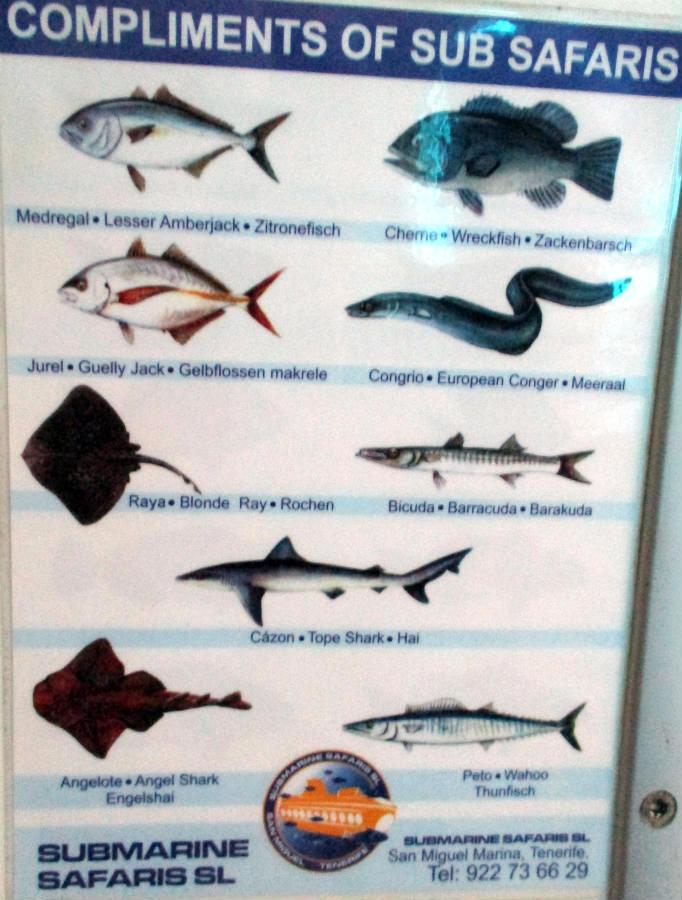 Fiskarter-Ubåtstur-Teneriffa-TravelGrip