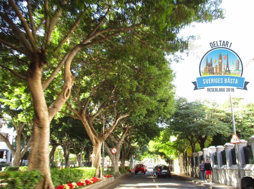 Rambla-i-Santa-Cruz-Tenerife-TravelGrip