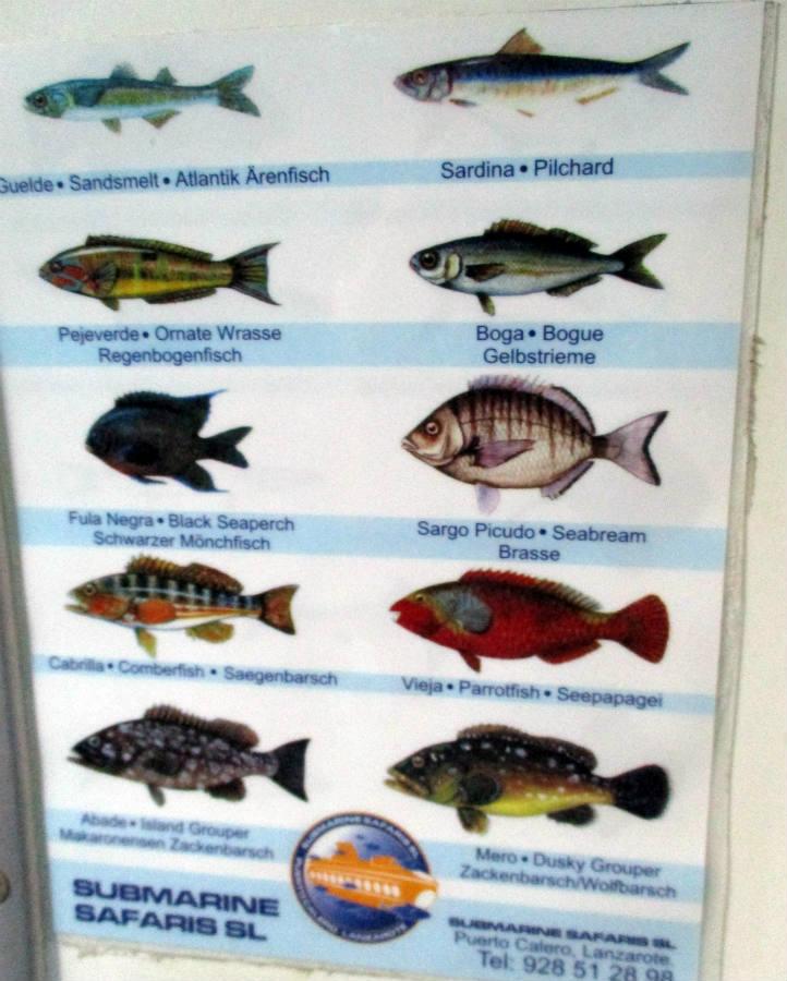 Ubåtstur-fiskarter-Teneriffa-TravelGrip-1