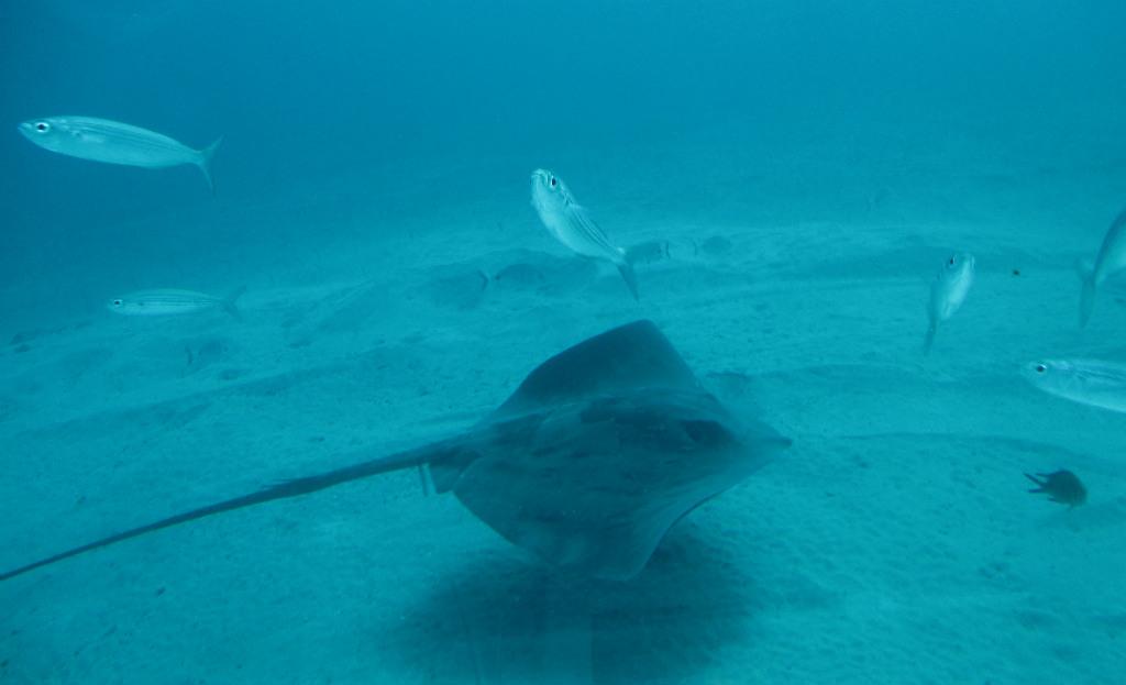 Stingrocka-Teneriffa-ubåtstur-Submarine-Safari-TravelGrip