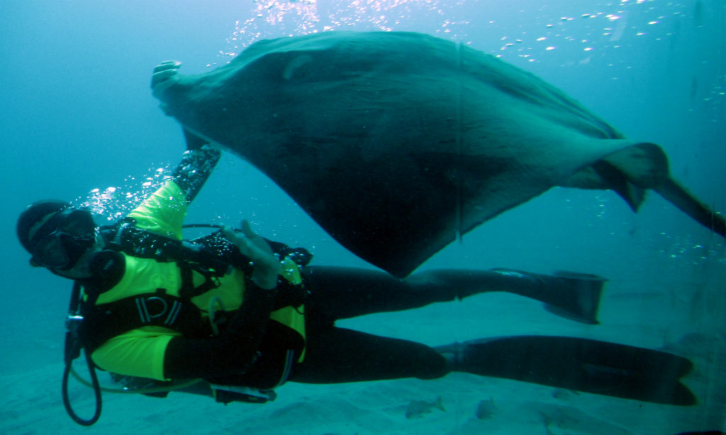 Ubåtstur-på-Teneriffa-Submarine-Safaris-stingrocka-TravelGrip