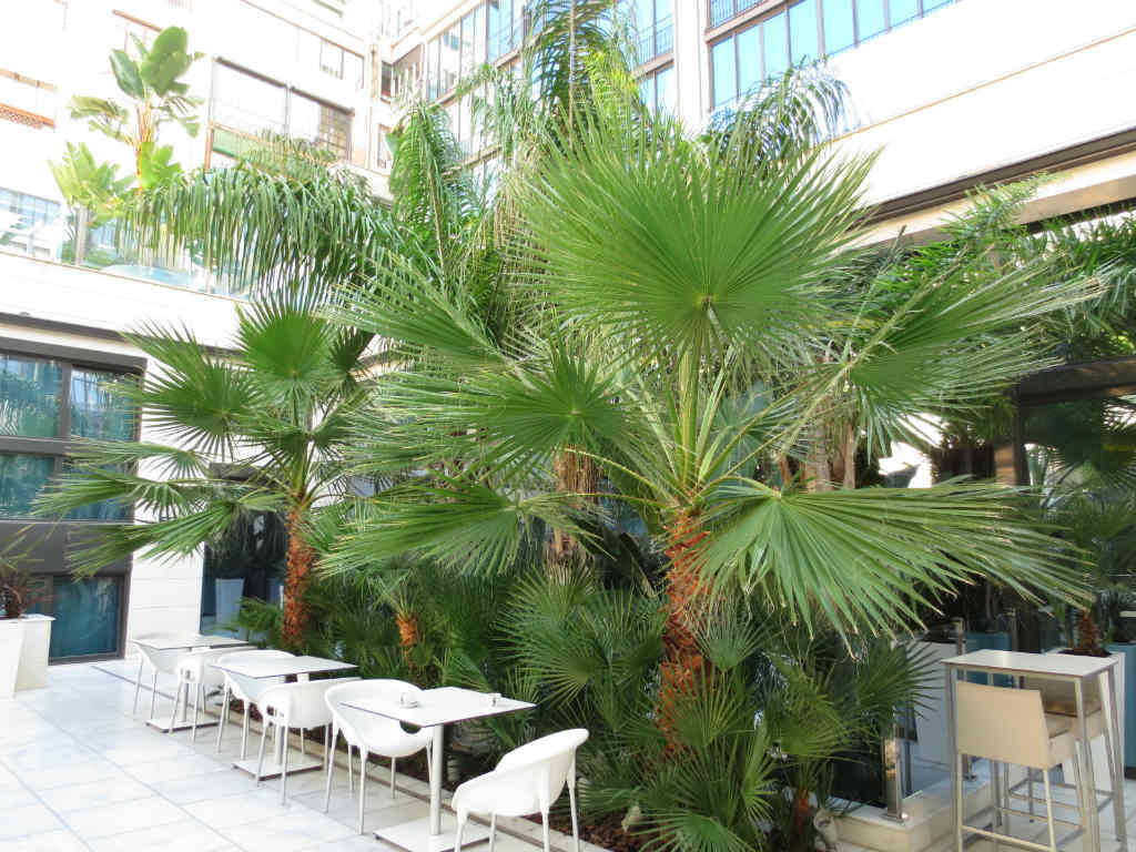 Hotel-Indigo-IHG-innergård-Barcelona-TravelGrip