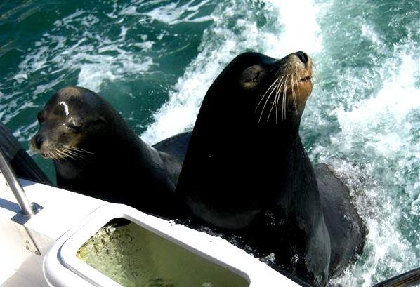 travelgrip-cabo-fiske