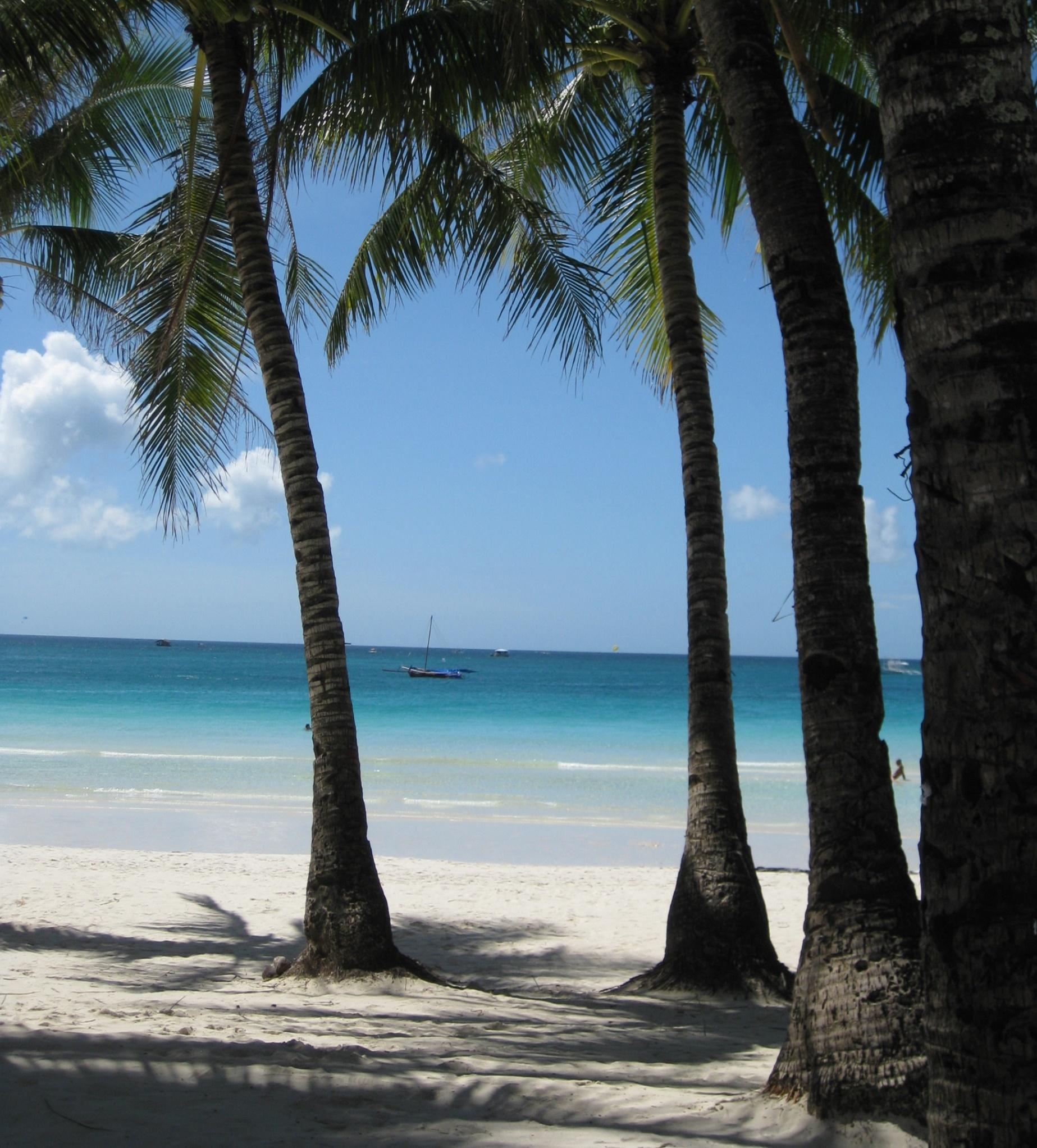 Palmer på ön Boracay i Filippinerna