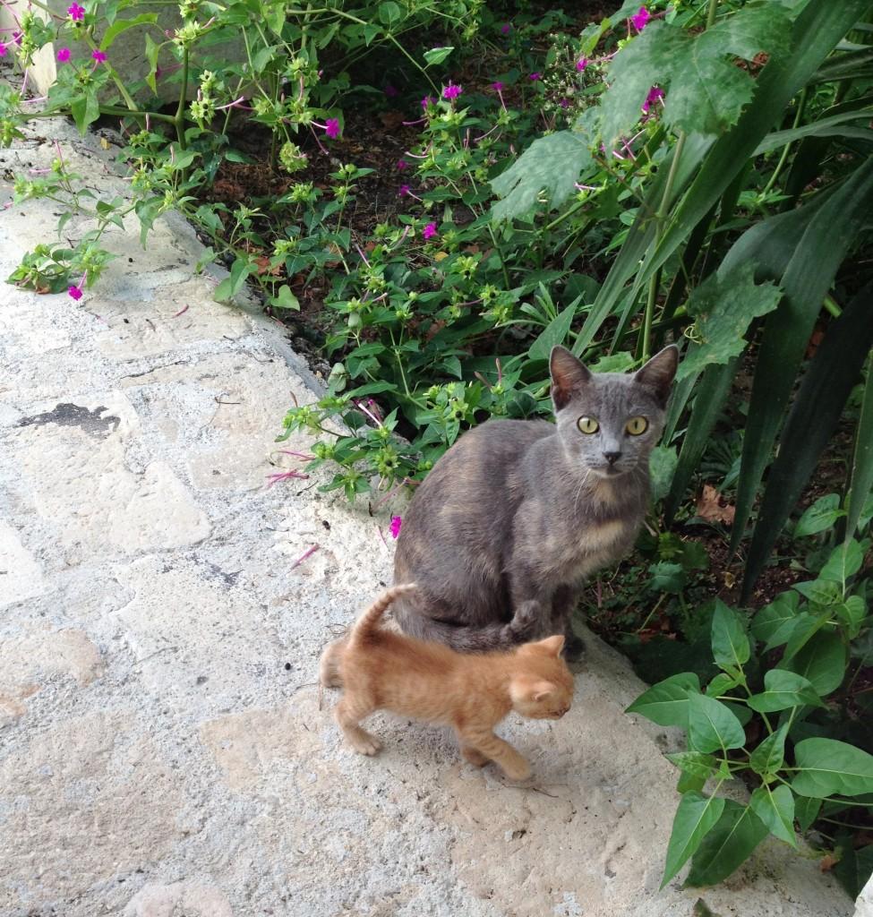 puglia-cats