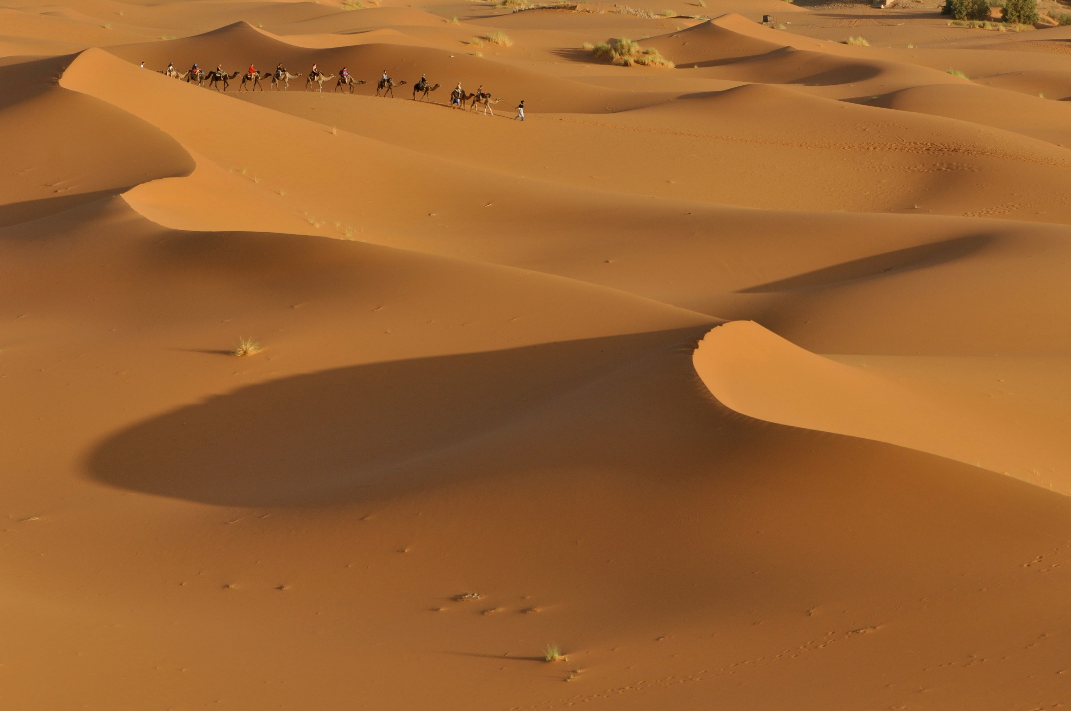 Ökensafari i Mellanöstern