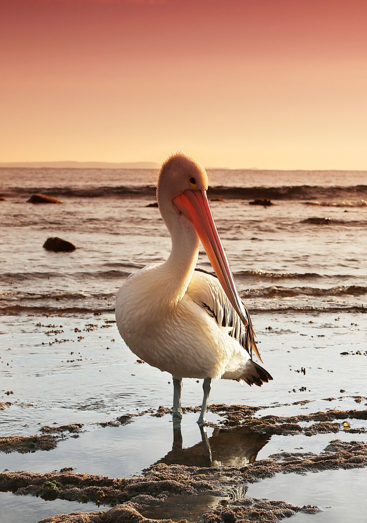 pelikan-florida-travelgrip
