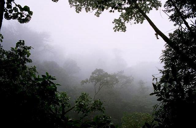 costa-rica-djungel-travelgrip