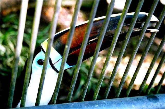 costa-rica-zoo-travelgrip