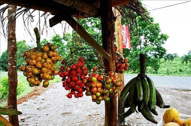 costa-rika-frukter-travelgrip