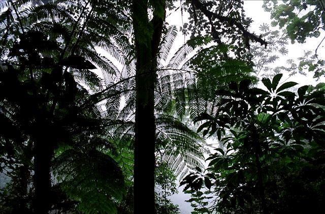 djungel-travelgrip