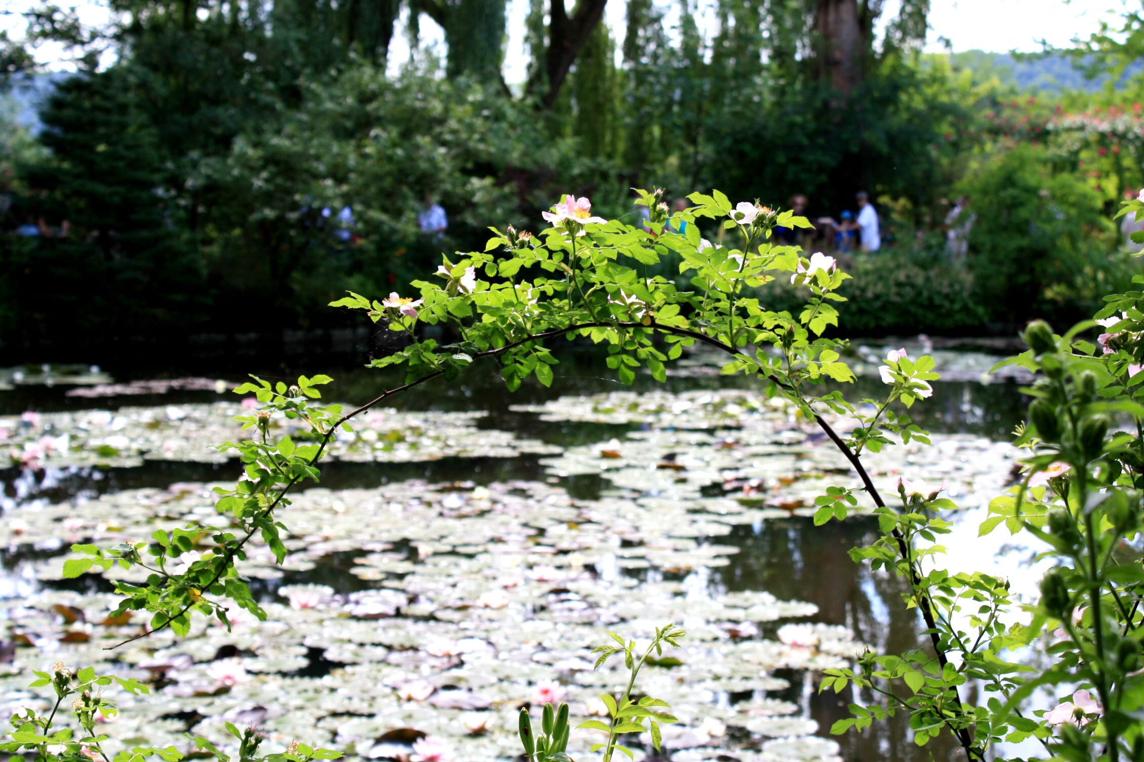 giverny-monet-garden-france-travelgrip- (40)