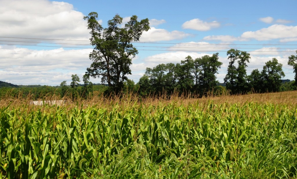 amish-country-pennsylvanina-travelgrip- (2)