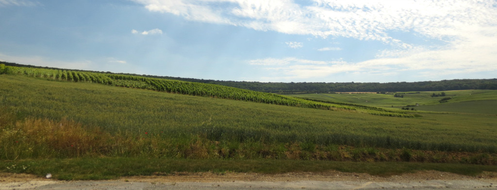 Champagne-odlingar-frankrike-travelgrip