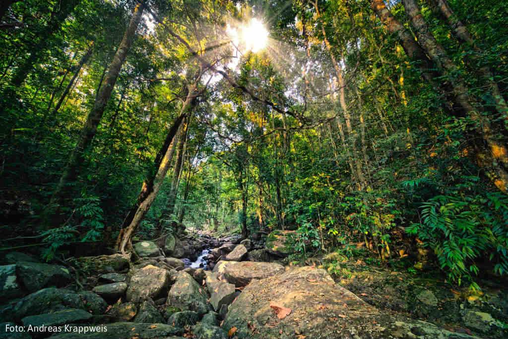 SriLanka-tropiska-djungel-TravelGrip